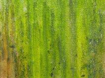 El primer del verde áspero texturizó el fondo y el boke Imagen de archivo libre de regalías