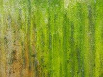 El primer del verde áspero texturizó el fondo y el boke Fotos de archivo libres de regalías