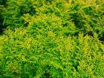 El primer del verde sale del árbol al aire libre Fondo de la naturaleza Imágenes de archivo libres de regalías