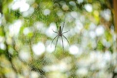 El primer del web de araña (telaraña) Fotografía de archivo