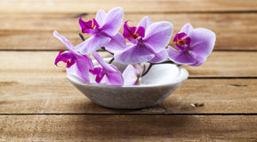 El primer en orquídea rosada florece en el fondo de madera para la hidración Imagenes de archivo