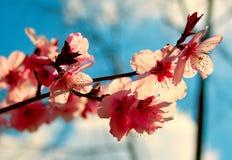 El primer florece I Imagen de archivo