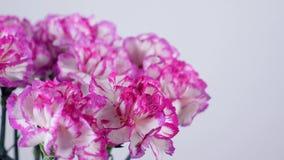 El primer, flores, ramo, rotación en el fondo blanco, composición floral consiste en el clavel turco púrpura brillante almacen de metraje de vídeo