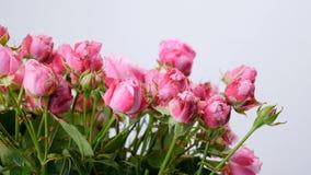 El primer, flores, ramo, rotación en el fondo blanco, composición floral consiste en rosas almacen de metraje de vídeo