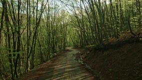 El primer follaje en el bosque de la montaña almacen de video