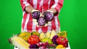 El primer, manos femeninas en guantes, guarda verduras, la berenjena en Chromakey, el fondo verde y una caja llena de diferente metrajes