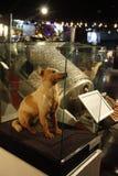 El primer perro del espacio Foto de archivo libre de regalías