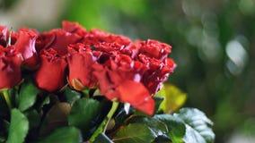 El primer, ramo de la flor en los rayos de la luz, rotación, la composición floral consiste en las rosas, belleza divina almacen de video