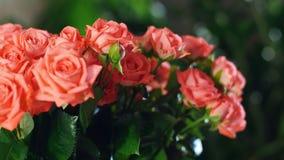 El primer, ramo de la flor en los rayos de la luz, rotación, la composición floral consiste en rosas anaranjadas Belleza divina metrajes