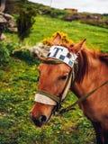 el primer tiró de caballo lindo con la muestra del taxi libre illustration