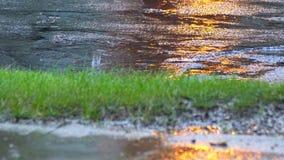 El primer tiró de las fuertes lluvias en las gotas de agua del camino en el asfalto almacen de video