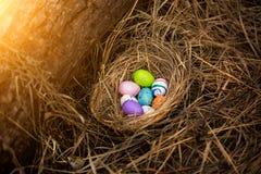 El primer tiró de los huevos de Pascua coloridos que mentían en jerarquía en el bosque Imagen de archivo