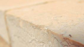 El primer tiró de un grupo de hormigas negras que caminaban en la pared de piedra en un día de primavera soleado en Israel almacen de video