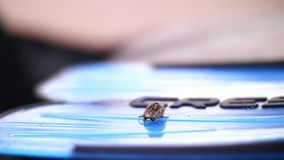 El primer, un pequeño cangrejo de ermitaño se arrastra en una de las aletas almacen de video