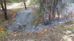 El principio de un fuego en el bosque almacen de video