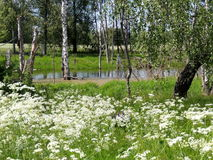 El principio del verano Imagen de archivo
