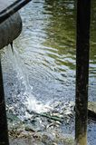 El problema de la ecología Muerte total de pescados en la charca foto de archivo