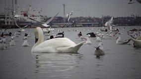El problema ecológico es cisnes, patos y gaviotas blancos en las aguas del puerto almacen de video