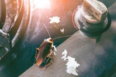 El problema en la casa debido a las cucarachas que viven en la cocina Cucaracha que come el pan del trigo integral Las cucarachas imagen de archivo libre de regalías