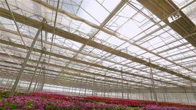 El proceso de abrir el tejado en un invernadero moderno grande Apertura del tejado en un invernadero moderno grande, almacen de metraje de vídeo