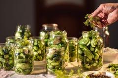El proceso de la preparación de los pepinos salados para conservar, Ucrania Fotografía de archivo libre de regalías