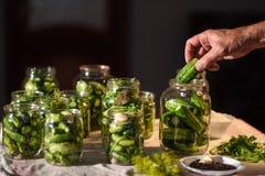 El proceso de la preparación de los pepinos salados para conservar, Ucrania Fotos de archivo libres de regalías