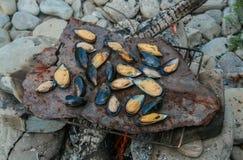 El proceso de preparar los mejillones en un fuego en el ambiente natural salvaje Foto de archivo