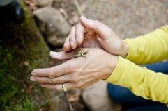 El profesor de ciencias encuentra una rana de árbol Imagen de archivo