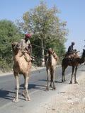 El programa piloto del camello lleva su camello abajo de la carretera Foto de archivo libre de regalías