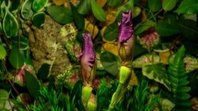 El prosperar de las flores del iris