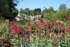 El pueblo bonito de Bibury en el Cotswolds Reino Unido, con valeriana roja florece en el primero plano y las cabañas de la fila d fotos de archivo libres de regalías