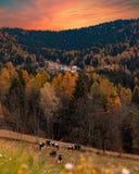 El pueblo en el bosque Fotos de archivo