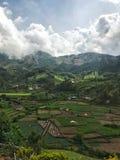 El pueblo está en plantaciones de té imagenes de archivo