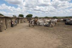 El pueblo tradicional de Maasai con su acción viva mantuvo el CEN imágenes de archivo libres de regalías