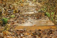 El puente de madera cubierto con abajo caida la hierba en el autu Imágenes de archivo libres de regalías