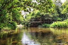 El puente en el río en selva Imagen de archivo libre de regalías