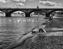 El puente en Praga fotos de archivo