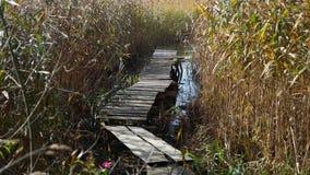 El puente largo viejo se coloca entre las cañas metrajes