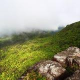 el puerto tropikalny las deszczowy rico yunque Zdjęcie Stock
