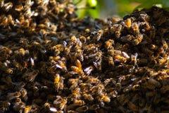 El pulular de las abejas Fotos de archivo libres de regalías