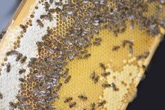 El pulular de las abejas Foto de archivo