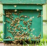 El pulular de las abejas de la miel Imágenes de archivo libres de regalías