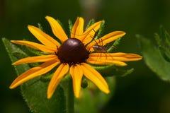 El punto de reclinación de una araña Imagen de archivo libre de regalías