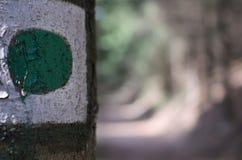El punto verde en el árbol marca manera en el más forrest Imagen de archivo libre de regalías