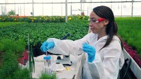 El químico de sexo femenino está observando las plantas con las sustancias químicas debajo del microscopio almacen de video