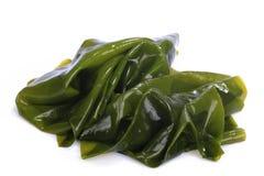 El quelpo de Kombu es una alga marina grande de las algas marrones Nombre binomial: Laminaria Ochroleuca Es una alga marina comes fotografía de archivo libre de regalías
