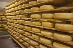 El queso de Gouda rueda en estantes en una tienda Fotografía de archivo libre de regalías