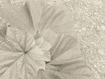 El quingombó se va en el hormigón presentado en el tono poner crema Fotografía de archivo