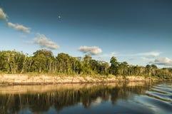 El río Amazonas y tierra Imagen de archivo libre de regalías