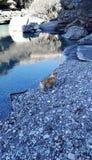 El río claro del agua fotografía de archivo